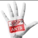 get-rid-of-ants